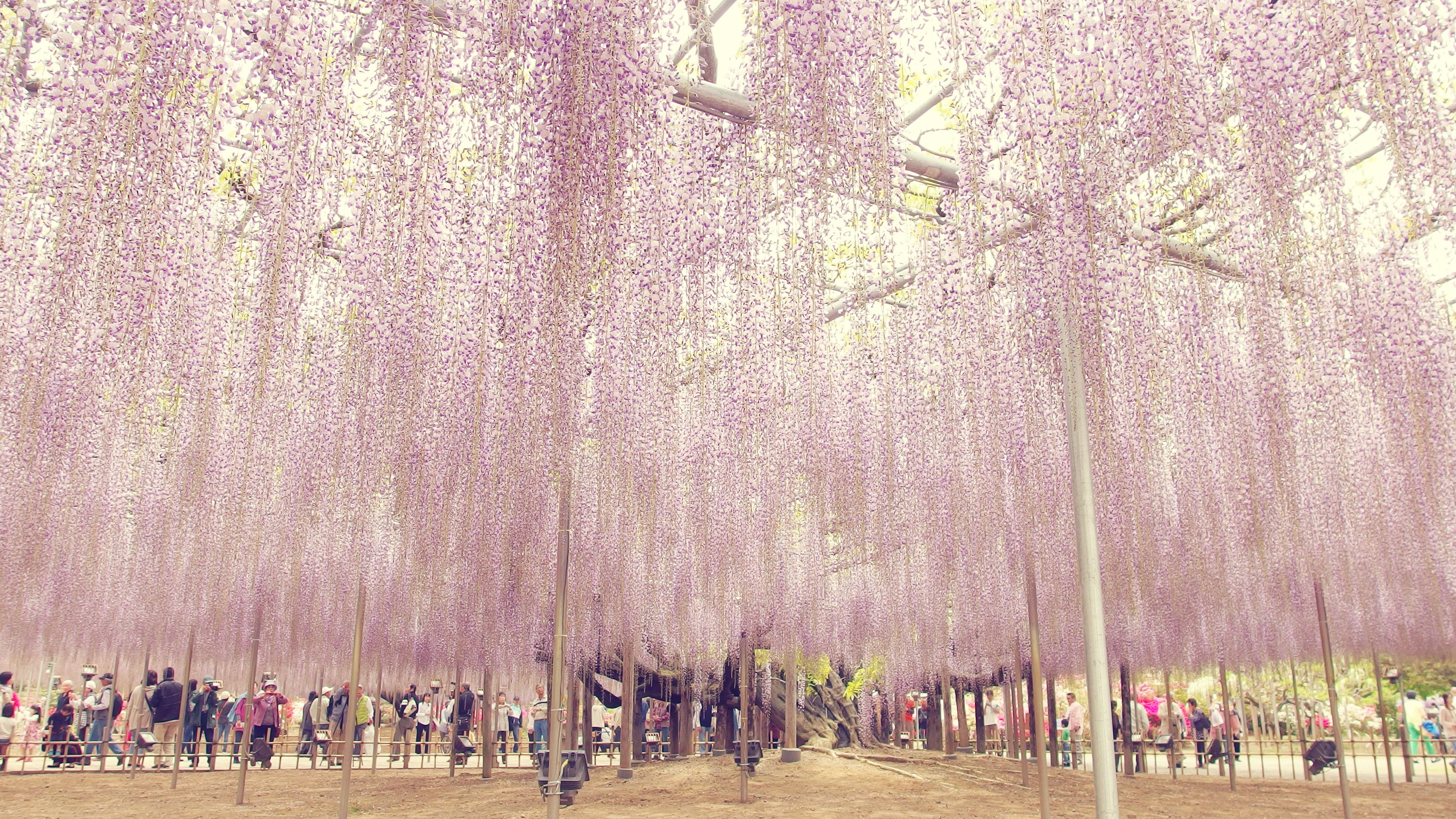 photo credit: at wisteria trellis. 藤棚にて. via photopin (license)